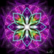 Enlarge Magic flower Photo