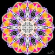Enlarge Purple jewel 2 Photo