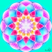 Enlarge Morning lotus Photo