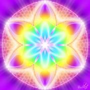 Enlarge Shining Lotus Photo
