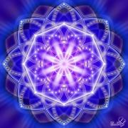 Enlarge Blue Lotus Photo