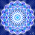 Infinity Bloom 2