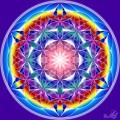 Floarea vietii - tiparul manifestarii