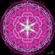 Enlarge Spirit violet Photo