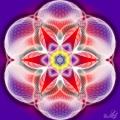 Floarea Vietii - Tipar