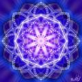 Lotus Albastru