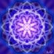 lotus_albastru