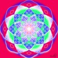 Lotus radiant