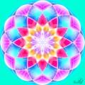 Lotusul din zori